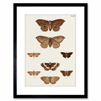 Painting Nature Study Insects Humboldt Various Butterflies Frame Print 9x7 Inch