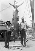 Thorvald Sanchez Next To Blue Marlin In Cuba 1930 OLD FISHING PHOTO