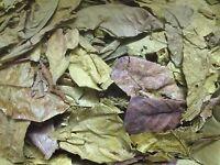 1 Kg Seemandelbaumblätter, Bruchlaub - Catappa Leaves Ketapang