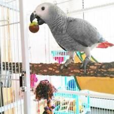 New listing Zanthoxylum Stand Stick Parrot Supplies Wood Bar 10 Cm Long Bird Scrub Stick W