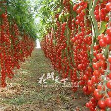 200PCS Mix Colorato semi di pomodoro piante vasi fioriere piante giardino casa