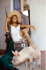 Raquel Welch As Sarita 100 Rifles 11x17 Mini Poster Golding Rifle Seated Chair
