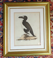 rare hand colored lithograph extinct bird Great Auk H L Meyer 1839 signed