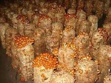 Pholiota nameko mushroom seeds mycelium plugs spawn 4 dowels + manual $4.90