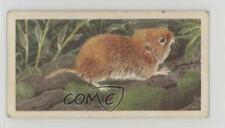 1958 Brooke Bond British Wild Life #28 The Field Vole or Grass Mouse Card 4az