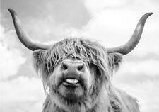 Scottish Highland Funny Cow Natural Modern Country Canvas Print A3