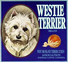 Marshall Canyon West Highland Terrier Dog Orange Citrus Fruit Crate Label Print