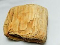 Petrified Wood Specimens  4 Oz. 2 x 1 1/2 x 1  in.