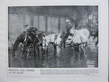 1915 WW1 PRINT ~ BRINGING THE HORSES TO THE WATER