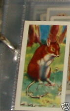 #16 Long tailed field mouse - trade card