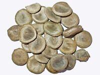 Gewöhnliche Brechnuss -Strychnos nux-vomica- Saatgut Mengenauswahl
