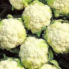 Cauliflower Snowball Y Vegetable Seeds