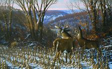Oak Ridge Challenge - Whitetail Deer - Print by Wildlife Artist Michael Sieve