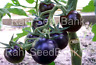 Dancing With Smurfs - A Real True Flavor Stunning Black Tomato! - 10 Seeds