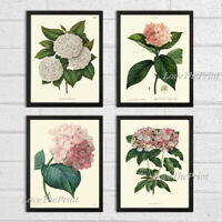 Unframed Botanical Prints Set 4 Antique Pink White Hydrangea Plant Flowers Art
