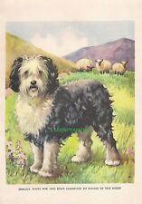 Old English Sheepdog Sheep 1930's Childrens Vintage Art Print Ae Kennedy Cutest