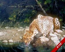 WILD CAT CHEETAH DRINKING LAPPING WATER PAINTING AFRICAN ART REAL CANVAS PRINT