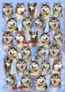Alaskan Malamute Dog Christmas Gift Wrapping Paper - by Starprint