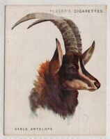 East African Sable Antelope 1930sTrade Advertising Card