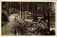 FRIEDRICHRODA Thüringen alte AK *Das kühle Tal* um 1925 Weg Baum Brücke