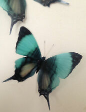 4 Teal Olive Green Flying 3D Butterflies Wall Mounted Butterfly Home Accessories