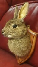 More details for taxidermy rabbit head