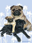 Pug Daddy Variety Outlet