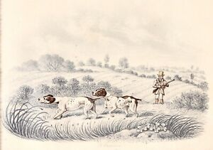 Antique Sporting Painting Of English Pointers On Shoot. By B. Fenning, c.1830.