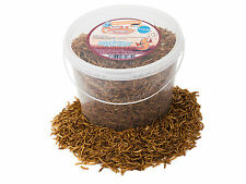 5 Litres High Quality Chubby Dried Mealworms in a Tub Mealworm for Wild Birds