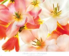 Tulips 2 Harold Davis Art Print 24x18
