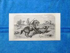 Gravure Année 1863 - Oryx ou gemsbok+Chasse à l'autruche - Caccia orice+struzzo