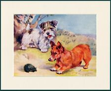 SEALYHAM TERRIER CORGI AND HEDGEHOG GREAT DOG PRINT MOUNTED READY TO FRAME