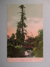 1907 PALO ALTO TREE STANFORD UNIVERSITY CA. POSTCARD 2B23