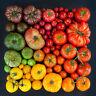 TOMATO SEEDS  / Choose between 85 varieties Heirloom Organic Seeds