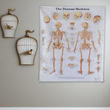 Anatomy Picture Pathology Skull 90cm Text Book Medical Poster Human Skeleton
