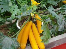 Vegetable seed- Yellow Banana melon seeds cassabanana curuba curua coroa Rare