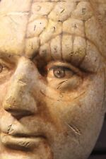 Phrenology Head Painted Medical Doctor Anatomy Psychology Science Cranioscopy