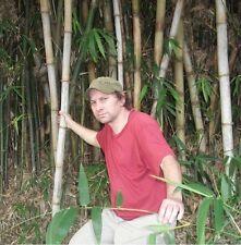 Wasserbambus Teichbepflanzung Wasserpflanzen Teichpflanze Pflanzen für den Teich