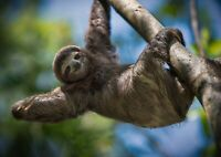 A3| Sloth Chilling Poster Size A3 Lazy Kids Animal Cool Teen Poster Gift #15865