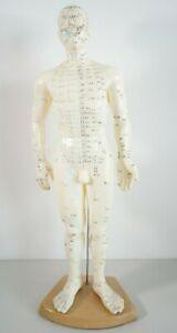 Akupunktur Körpermodell Mann ca. 50cm Meridiane Punkte