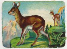 54/557 SAMMELBILD KLIPPSPRINGER