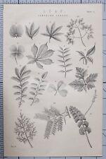 1868 Imprimé Feuille Composé Feuilles Divers Types Botany