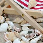 Approx 40pcs Beach Mixed SeaShells Mix Aquarium Decor Sea Shells Craft