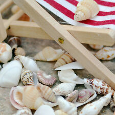 Approx 40pcs Beach Mixed SeaShells Mix Aquarium Decor Sea Shells Craft