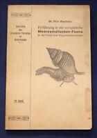 Buchner Einführung in die europäische Meeresmollusken- Fauna 1913 26 Tafeln js