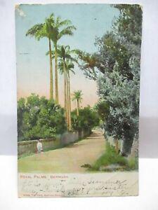 1908 THE TOWER HAMILTON POSTCARD ROYAL PALMS, BERMUDA BOY BERMUDA CANCEL, STAMPS