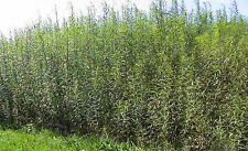Double Hedging Kit 5 ft Tall By 30 Feet Long
