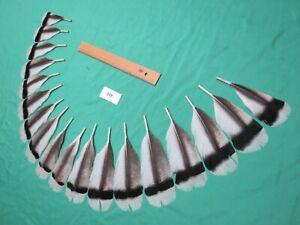 16cm Mosca De Pollo Disfraz De Artes Artesanía Sombrero Natural Plumas Gallo ala 12cm