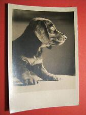 AK Hund Dackel Teckel Dachshund Welpe gelaufen nach Karlsruhe