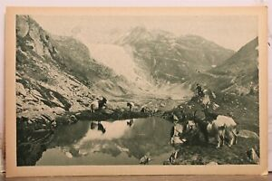 Switzerland Chevres Valaisannes Walliserziegen Rhone Glacier Postcard Old View